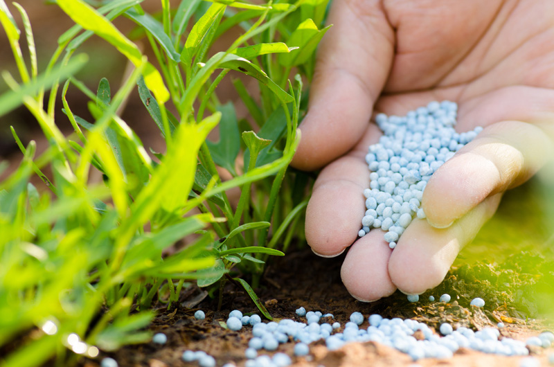 A hand holding fertilizer above a mulched yard