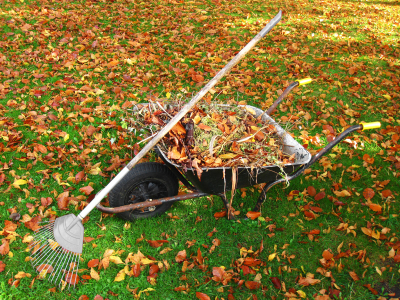 Leaves and dead branches being collected in a wheelbarrow