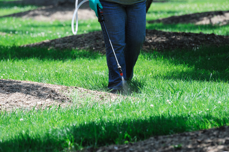 A person spraying weedkiller on grass and mulch