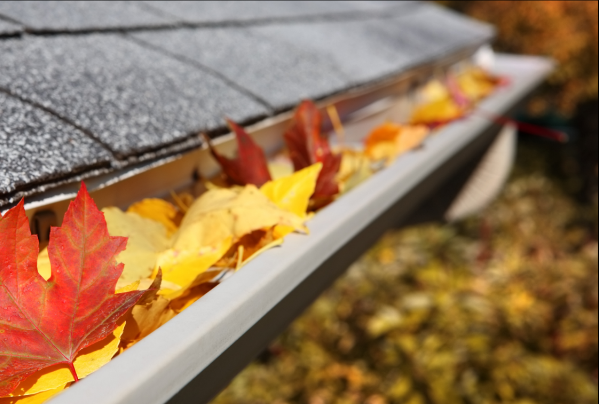 Orange and red leaves in gutter