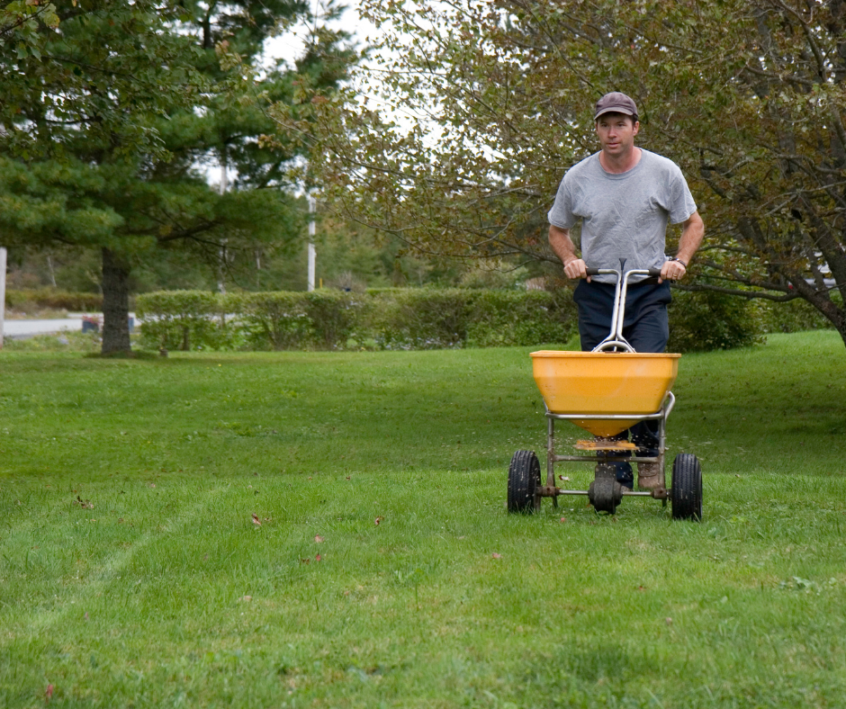 man fertilizing grass